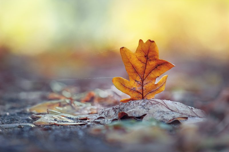 canon 55-250, beautiful, красивый, moment, момент, nature, природа, minimalism, минимализм, leaf, лист, oak, дубовый, осенний, autumn, осень, Солнечной осени слушая тишину...photo preview