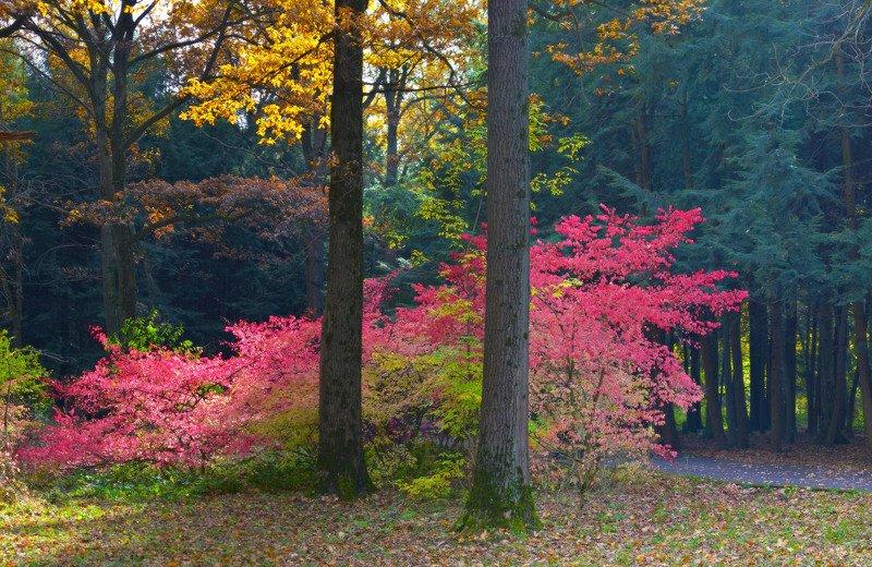 осень, ботанический сад Взрывphoto preview