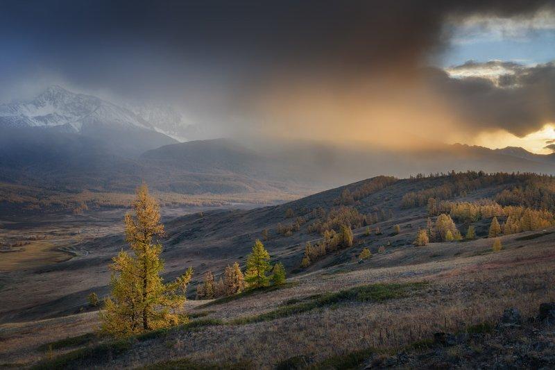 алтай, ештыкель, лиственницы, закат, луч, дождь, пелена, горы, северо-чуйский хребет, золотая осень, улаганский район, джангысколь В свете дождяphoto preview