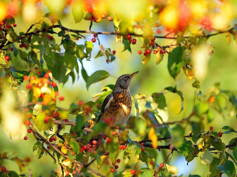 природа, фотоохота,  птицы, животные, осень Птицы нашего сада 3photo preview