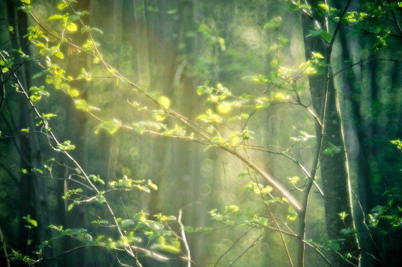 Весна идет...photo preview