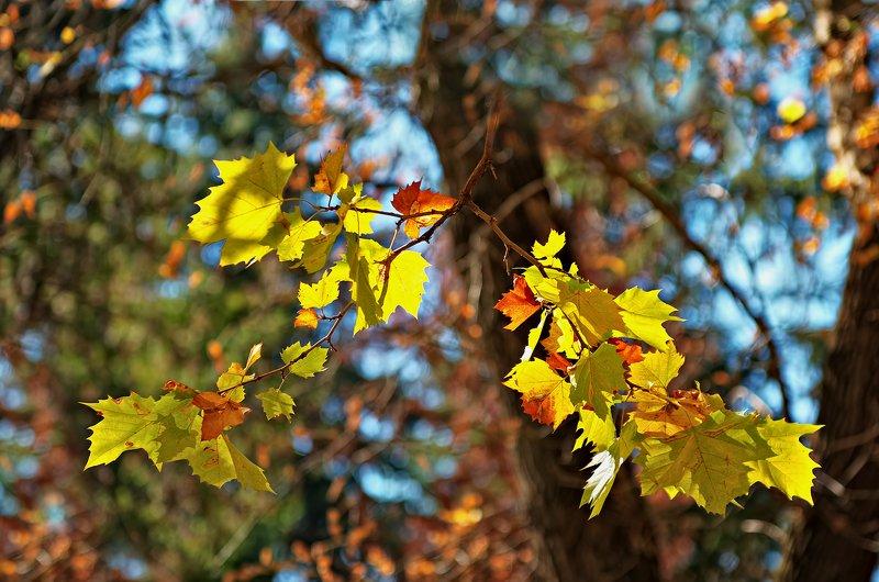 autumn, bokeh, color, colors, color image, leaf, leaves, impression, nature, photography, Autumn Colorsphoto preview