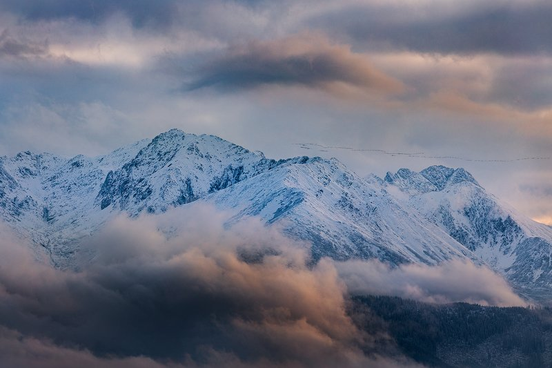 Flight of wild geese over the Tatras, Poland.photo preview
