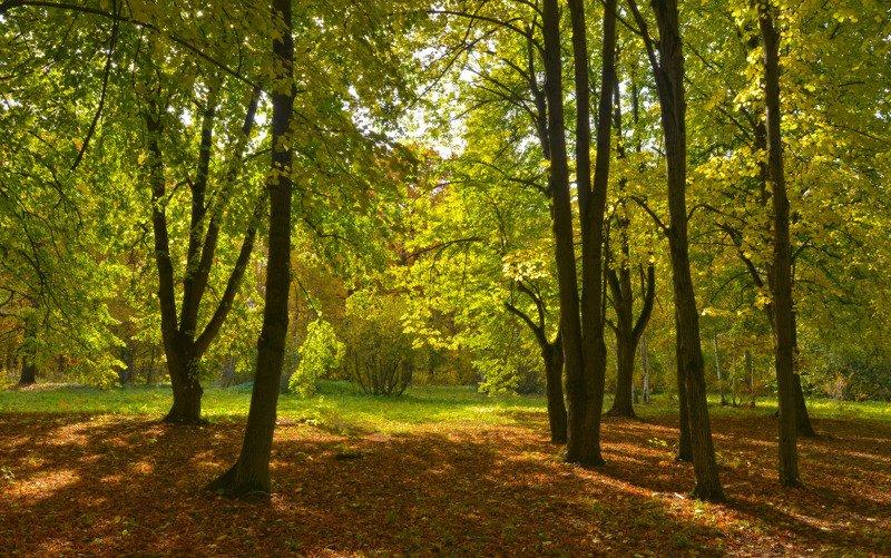 ранняя осень, ботанический сад Свет ранней осениphoto preview