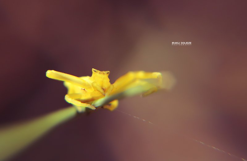 spider, macro, close-up, canon, sun, yellow, spider web, 50mm, photography Macro Worldphoto preview