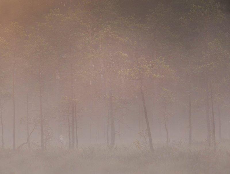 болото, кайф, рассвет ,север ,солнце, свет, закат, облака, отражение, фототур Болотный ритмphoto preview