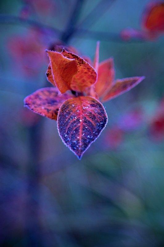 осень, мороз, природа, лист, куст Дыхание зимы #3photo preview