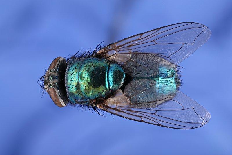 муха насекомое макро .....photo preview