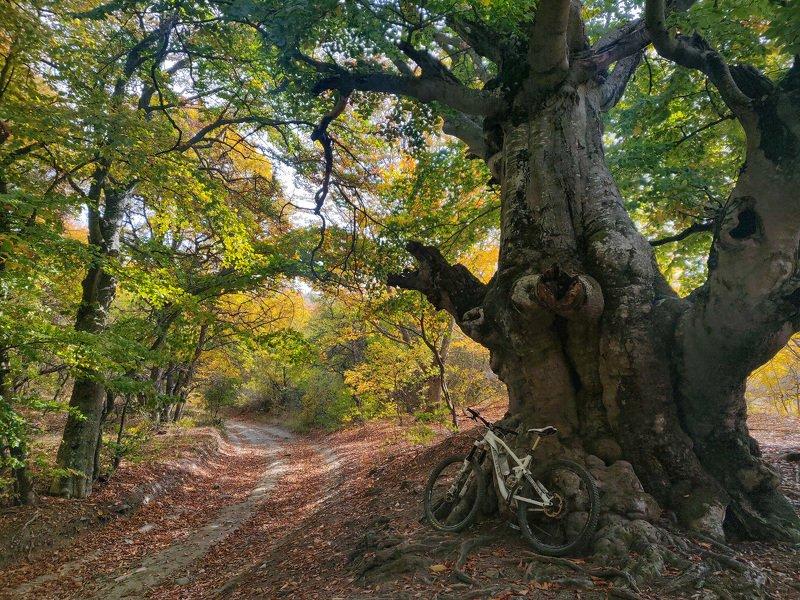 Крым, лес, вело, алушта В лесах Крымаphoto preview