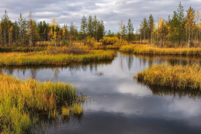 осень, октябрь, болото, пасмурно, вода, деревья, трава, желтая, небо, облака Осень у старого болотаphoto preview