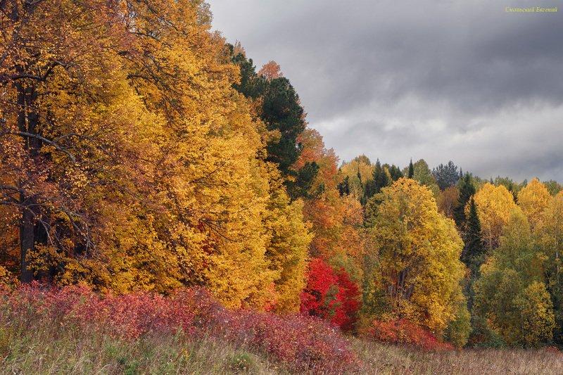 осень, лес, листья, пасмурно, сентябрь, парк Оттенки осениphoto preview