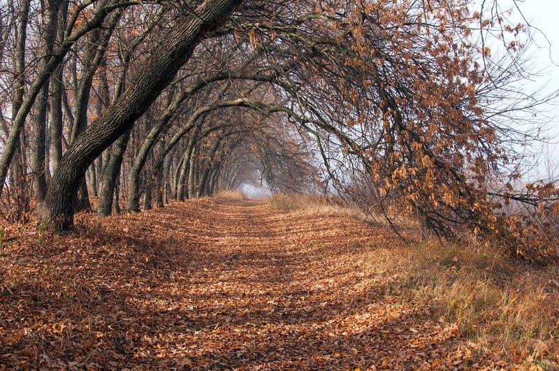 осень, дорога, аллея, природа Дорогами осени...photo preview