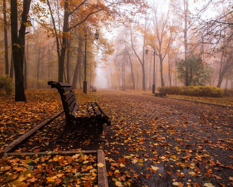 осень, листья, парк Осенняя атмосфера photo preview
