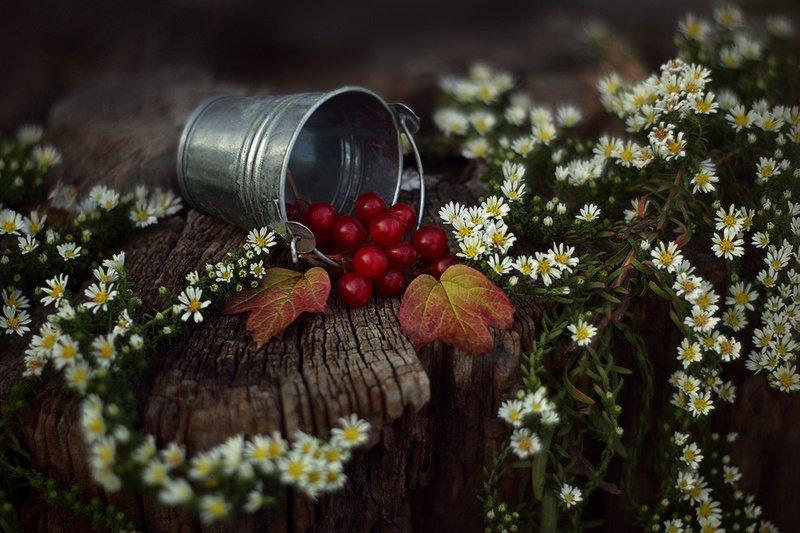 осень, октябрь, натюрморт Октябрь.photo preview