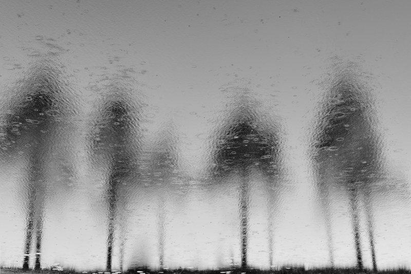 Сосны и дождь photo preview