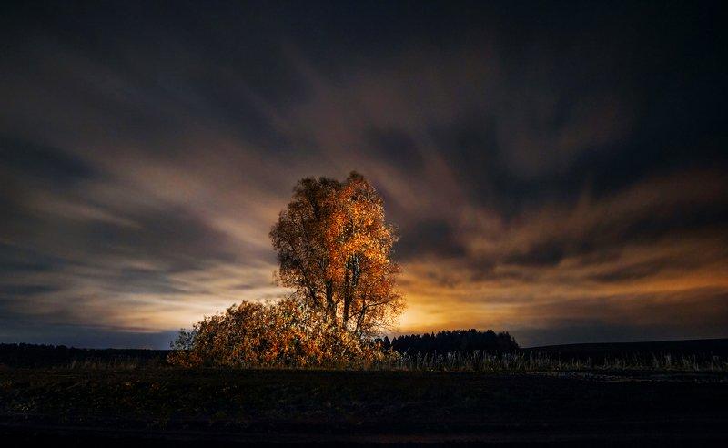 Дерево, ночной пейзаж, ночь, облака, длинная выдержка Одинокое деревоphoto preview