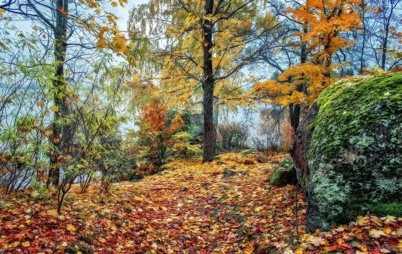 осень,пейзаж,лес,парк,камень,мох,листья,золото Осень в парке Монрепо.photo preview