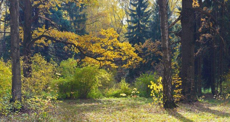 В осенних лабиринтахphoto preview
