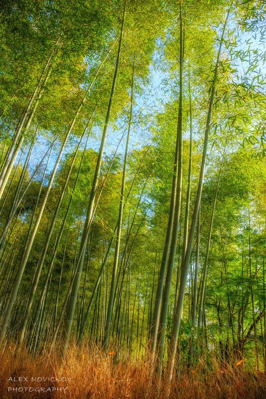 Когда деревья были большиеphoto preview