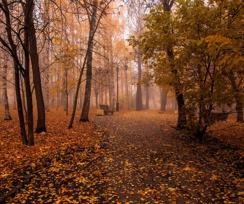 Золотая осень photo preview