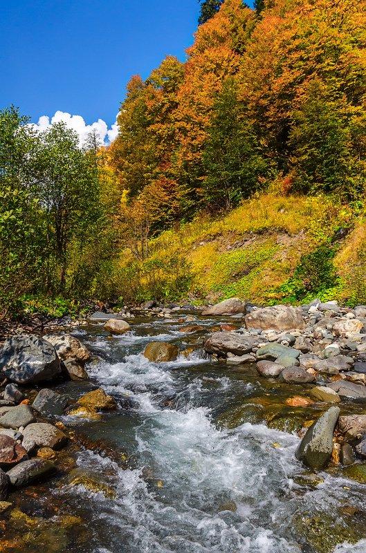 nevant60, пейзаж, красота, природа, горы, абхазия Осень на реке Лашипсыphoto preview
