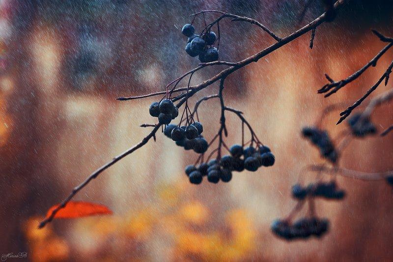 осень, октябрь, черная рябина, дождь Настроение - октябрьphoto preview
