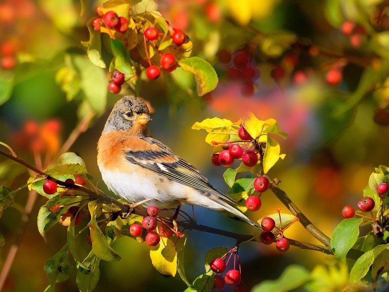 природа, фотоохота,  птицы, животные, осень В осеннем садуphoto preview