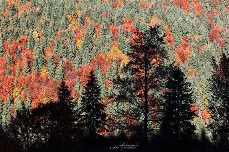 румыния Осенний ковер (на стену :-))photo preview