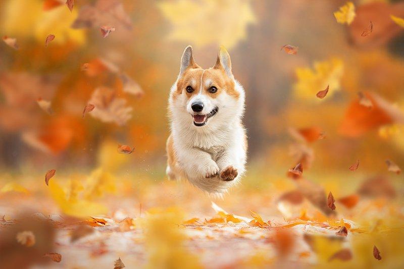 Осенний полет фото превью