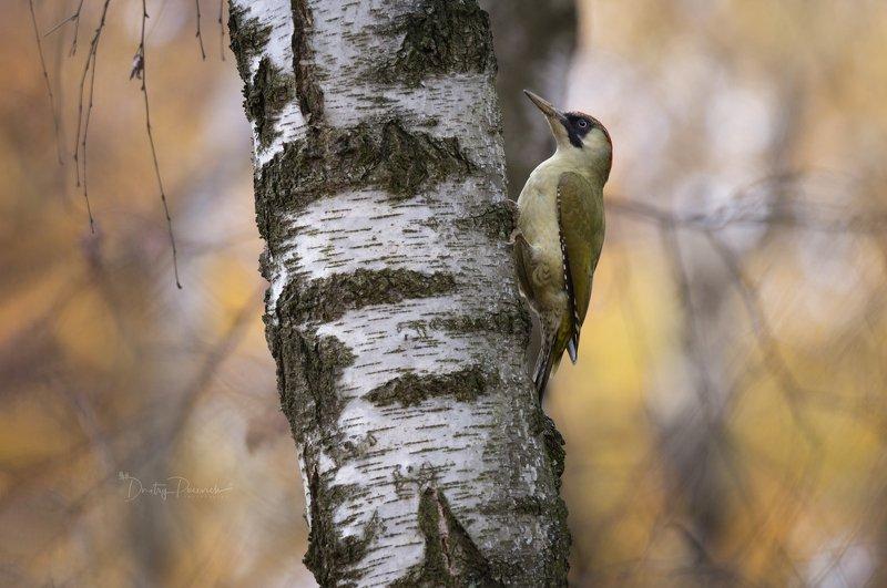природа, лес, животные, птицы Зелененькой она былаphoto preview