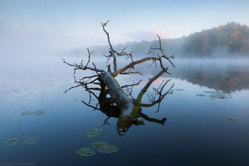 Утро на тихом берегу.photo preview