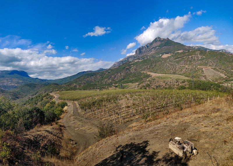 Крым, виноградники, алушта, горы Крымские виноградникиphoto preview
