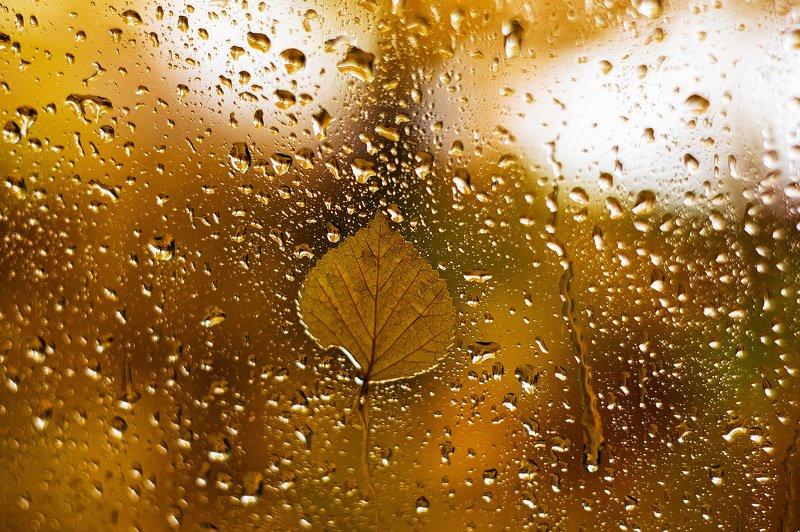 осень, дождь, настроение, стекло, природа, лист, Дары октября 2photo preview