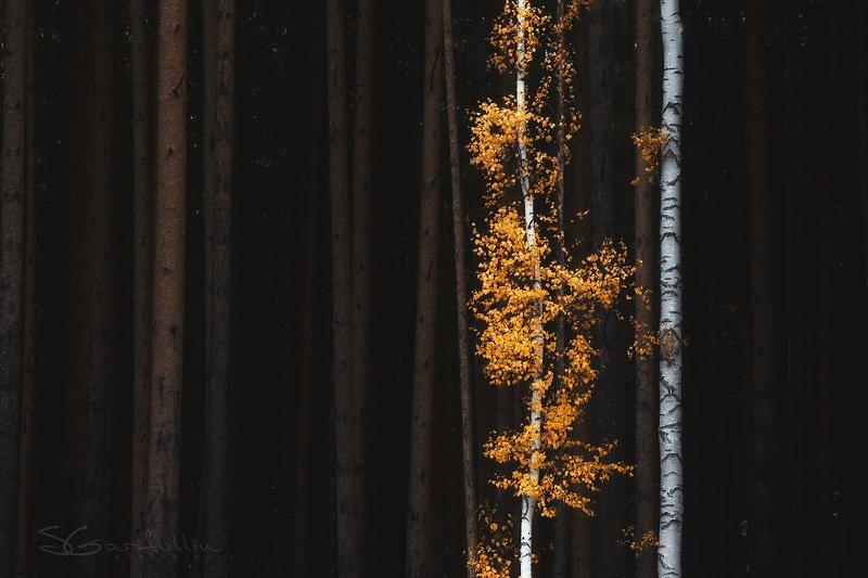 #урал, #осень, #среднийурал Золото Уралаphoto preview