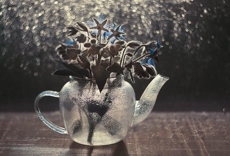 Синие цветыphoto preview