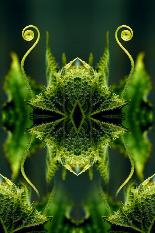 креатив, манипуляция, концепция, абстракция, цифровое, искусство, abstraction, digital, art, mantis Богомол...photo preview