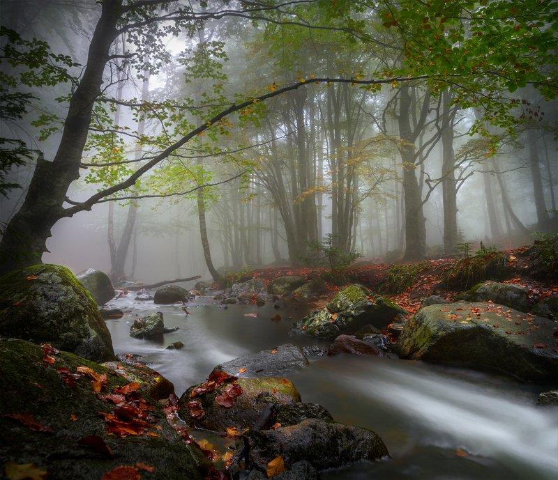 landscape nature scenery forest wood autumn river longexposure mountain rocks leaves vitosha bulgaria лес oсень With the October brush / С октябрьской кистьюphoto preview