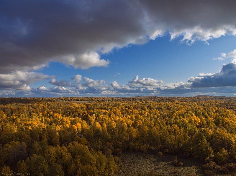 autumn, nature, aerial, drone, аэрофотосъемка, коптер, природа, пейзаж, landscape, осень Желтый-желтый лесphoto preview