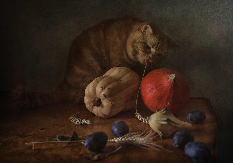 животные, кошки, кот, натюрморт, тыквы, сливы, колосья Рыжий октябрьphoto preview