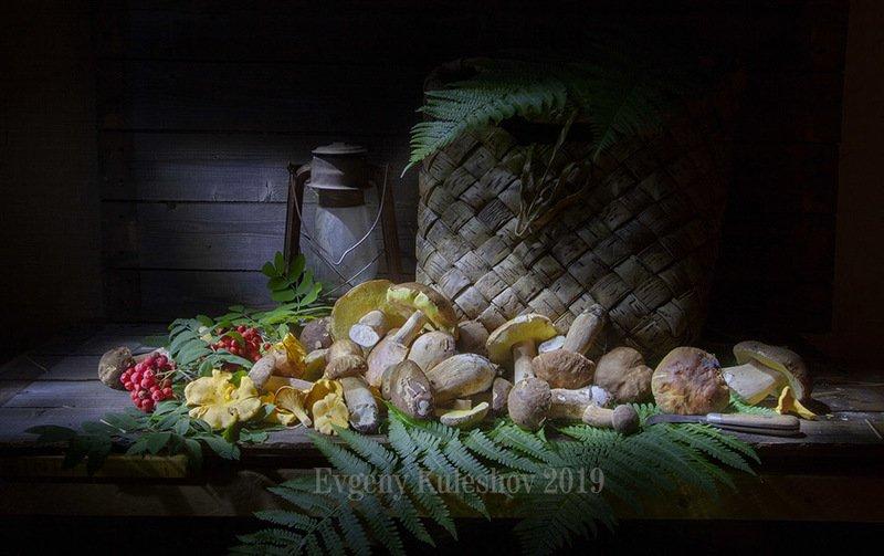 гриб, грибы, белый, подберезовик, лето, Евгений Кулешов, фотограф Евгений Кулешов Грибная пораphoto preview
