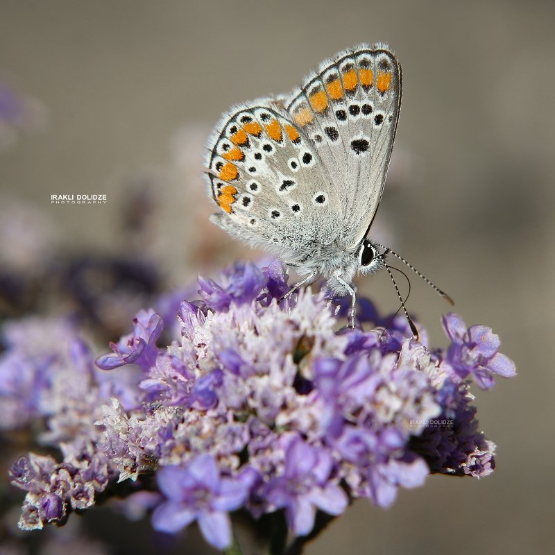 butterfly, macro, close-up, flower, macro world, photography, canon, 6d, love, nature Macro Worldphoto preview