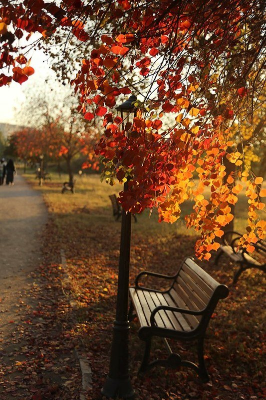 Colors Autumn F-9 Park Islamabadphoto preview