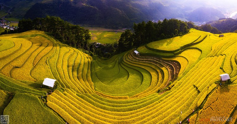 quanphoto, landscape, rice, terraces, valley, farmland, agriculture, culture, vietnam Golden Rice Terraces Valleyphoto preview