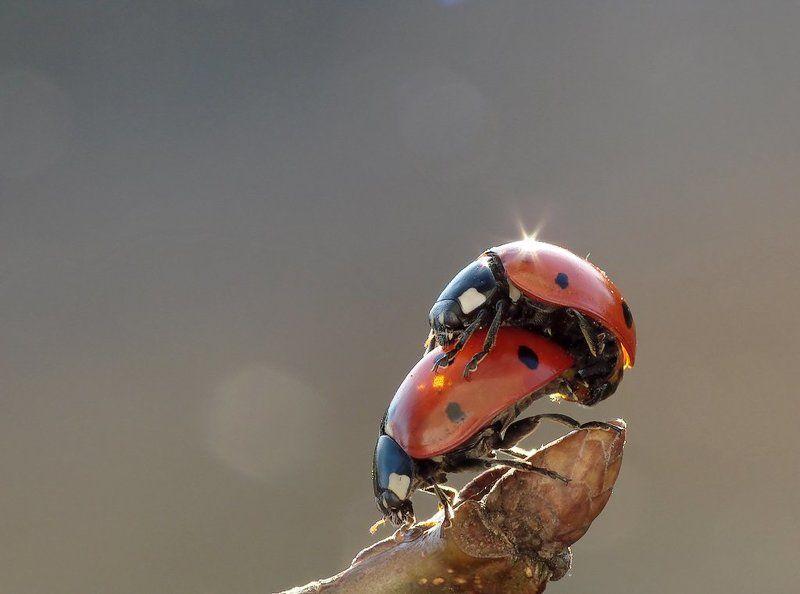 Картинки, веселые картинки жуков