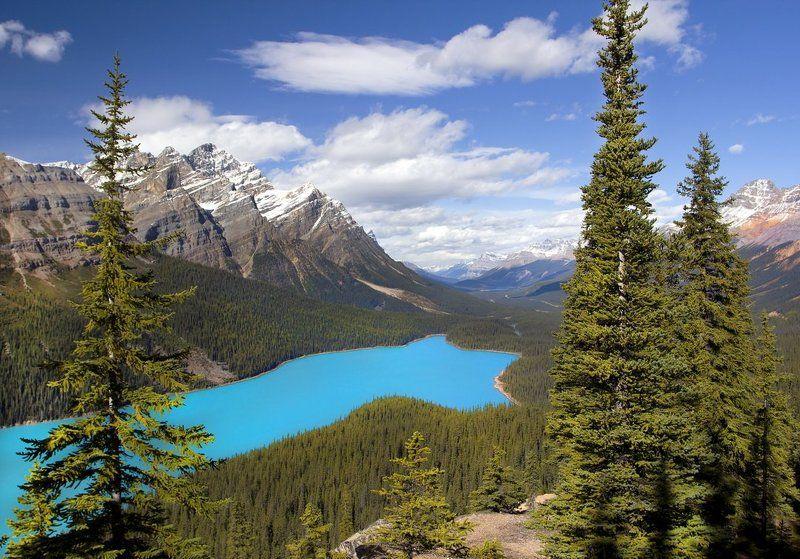 канада, скалистые горы, озеро, пейто, peyto, елки Скалистые горыphoto preview