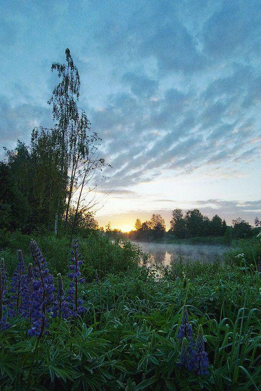 любимое, время, суток, -, рассвет утро 1 июняphoto preview
