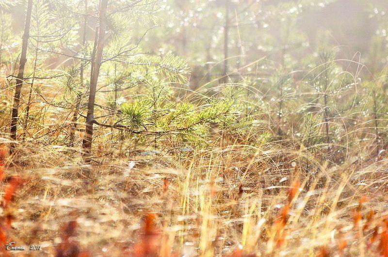 природа, осень Осенний свет....photo preview