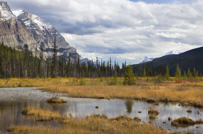 канада, скалистые горы, болото, осень ***photo preview