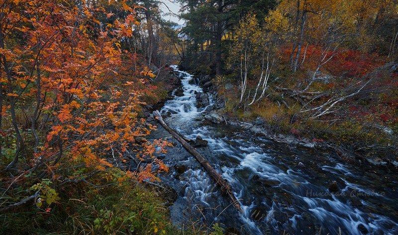 кавказ горы осень речка Горная речушкаphoto preview