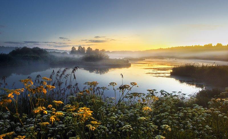 Пруд, ночь, туман, белые ночи, цветы  Ночной пруд photo preview